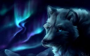 Обои горы, волк, северное сияние, by SnoSwirl