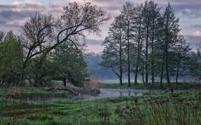 Картинка деревья, природа, туман, утро