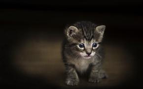 Картинка текстура, малыш, котёнок, тёмный фон