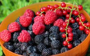 Картинка лето, ягоды, витамины, вкусно, дача