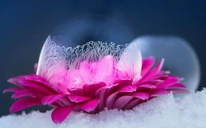 Картинка Макро, Цветок, Снег, Лед
