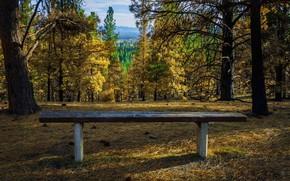 Картинка осень, деревья, скамейка