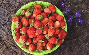 Картинка цветок, лето, ягоды, пень, клубника