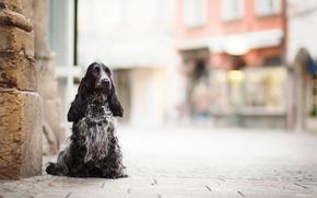 Обои друг, улица, собака