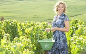 Картинка улыбка, актриса, Scarlett Johansson, блондинка, виноградник, певица, Скарлетт Йоханссон, корзинка