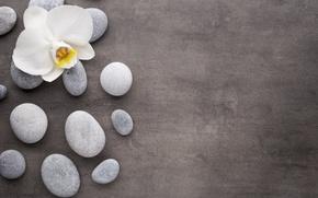 Картинка камни, white, flower, орхидея, orchid