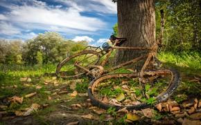 Картинка природа, велосипед, дерево