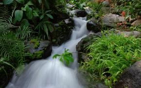 Обои ручей, камни, поток