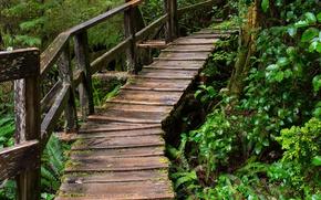 Картинка Лес, Дождь, Nature, Bridge, Rain, Мостик, Forest