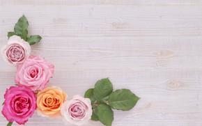 Картинка лист, фон, лепестки, Розы, бутоны