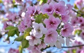 Картинка дерево, розовый, весна