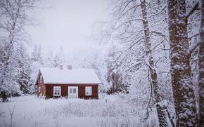 Обои зима, лес, дом
