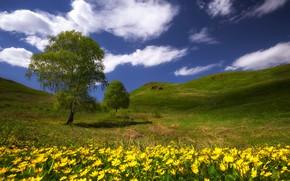 Картинка зелень, трава, облака, степь, тепло, дерево, холмы, весна, май, цветы полевые