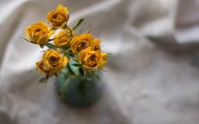 Картинка Желтый, Бутоны, Розы