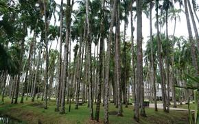 Картинка Palm garden, Paramaribo, Palmentuin