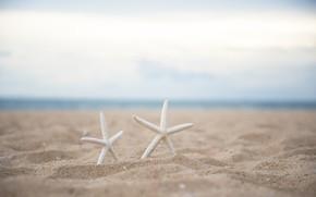 Картинка песок, пляж, природа, морская звезда
