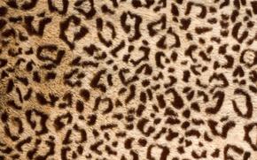 Картинка шкура, мех, leopard, texture, animal, fur