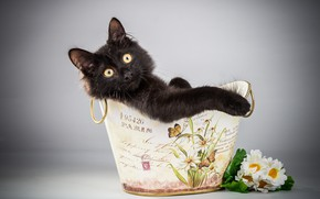 Картинка кот, взгляд, чёрный