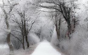 Картинка зима, иней, дорога, лес, снег