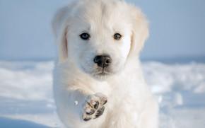 Картинка зима, снег, лапа, собака, щенок, пёсик