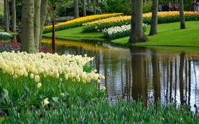 Картинка зелень, трава, деревья, цветы, пруд, парк, тюльпаны, Нидерланды, Keukenhof