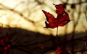Картинка осень, макро, свет, красный, лист, цвет, ветка