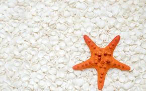 Картинка пляж, фон, ракушки, морская звезда, white, beach, texture, marine, starfish, seashells