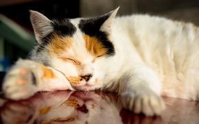 Картинка кошка, отдых, спит