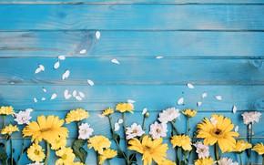 Картинка цветы, герберы, хризантемы