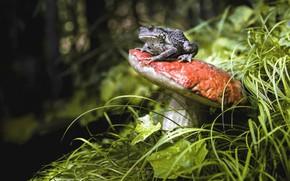 Картинка природа, гриб, лягушка