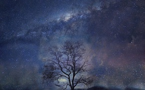 Обои ночь, дерево, звёзды