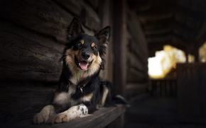 Обои друг, дом, собака