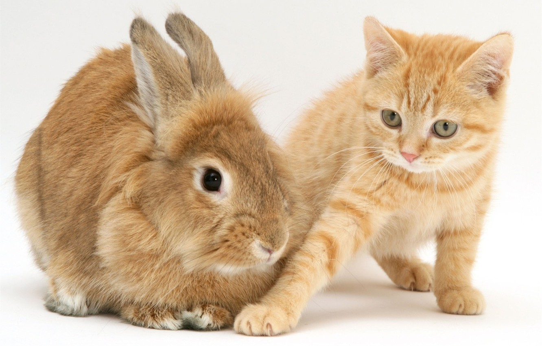 Картинки зайца и кота