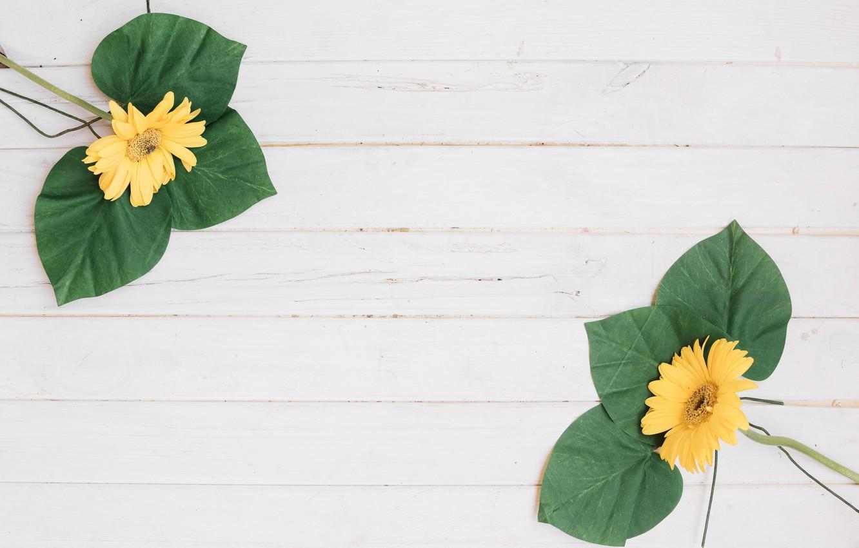 Фото обои Цветы, Листья, Белый фон, Герберы