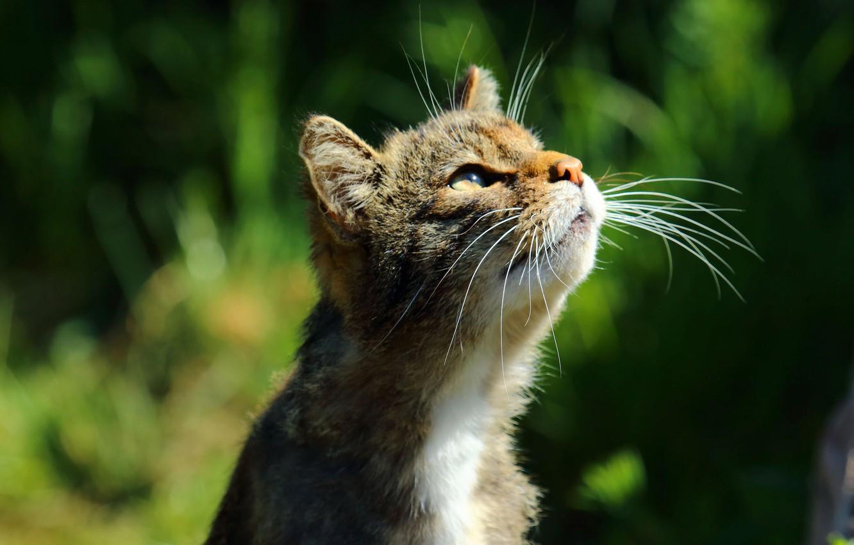 уникальный своей картинка котенок смотрит вправо огромного разнообразия
