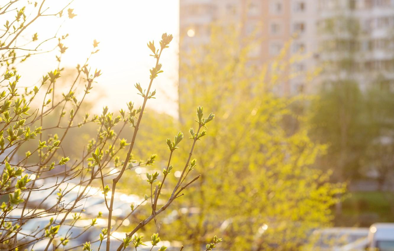 Фото обои листья, весна, вечер, май, солнечно, жилые массивы, контровой свет, вечер в городе, весенний вечер, весна …