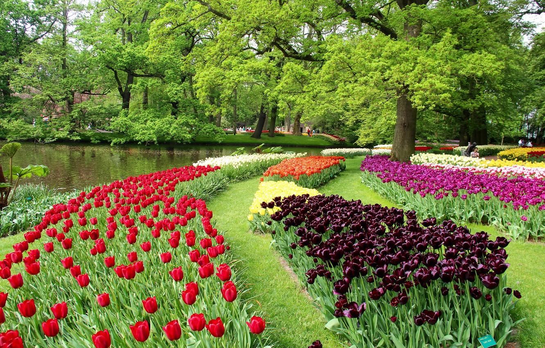 niderlandy-keukenhof-park-prud-zelen-der