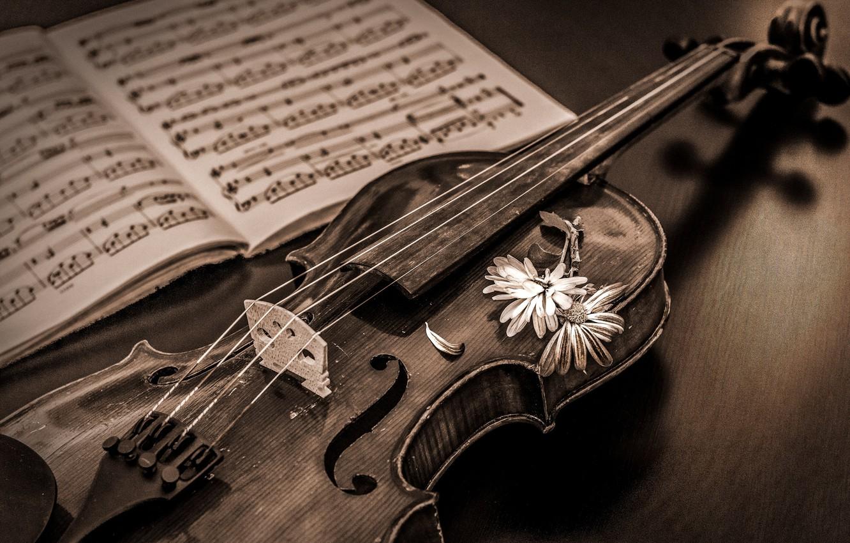 Обои музыка, скрипка. Музыка foto 6