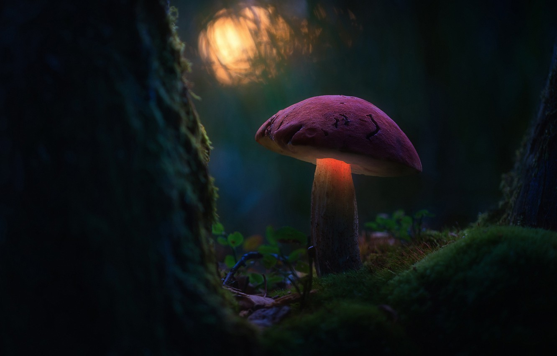 Фото обои лес, макро, свет, гриб, мох, боке