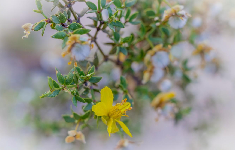 Фото обои цветок, листья, растение, лепестки