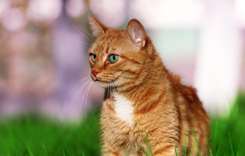 Фото обои зелень, кошка, кот, травка
