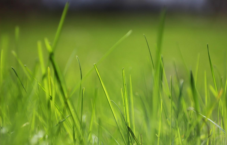 Фото обои зелень, весна, травинки