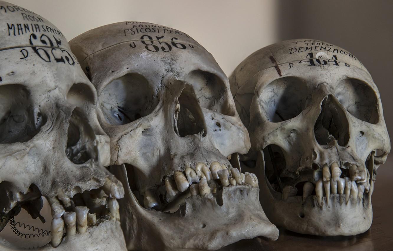 Обои череп, фон, makro. Разное foto 11