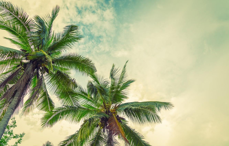 Фото обои пляж, лето, солнце, пальмы, summer, beach, paradise, palms, tropical
