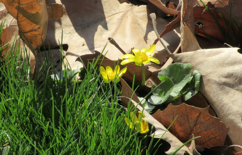 Фото обои листья, макро, цветы, апрель, весна 2018, meduzanol ©