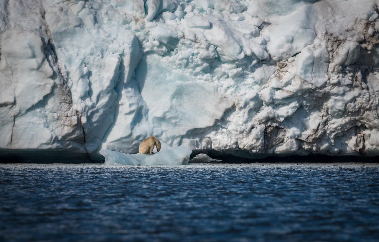 Фото обои море, снег, лёд, хищник, айсберг, льдина, белый медведь, полярный
