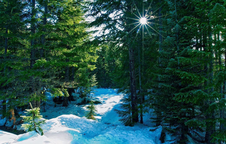 Фото обои лес, снег, пейзаж, ель