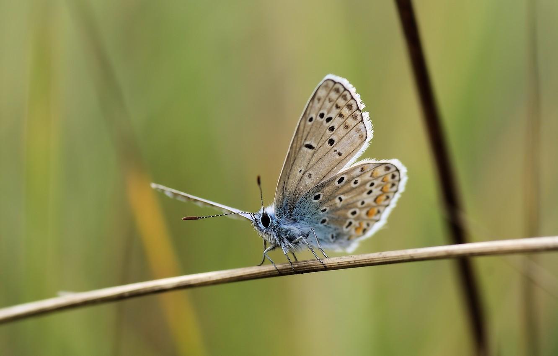 Фото обои butterfly, macro, graas, Ryszard Kosmala