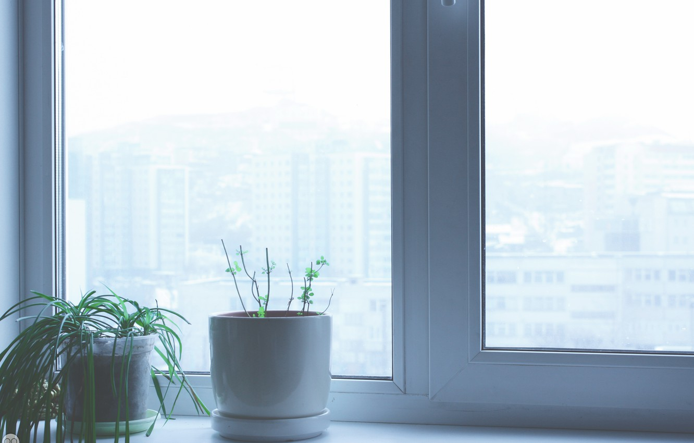 Фото обои цветок, интерьер, окно, подоконник, мята, window, home, flovers