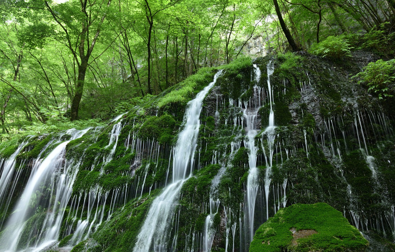 Фото обои лес, вода, природа, камни, растительность, водопад, мох